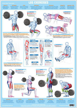 Leg Exercises Weight Training Fitness Instructional Wall Chart Poster - Chartex Products