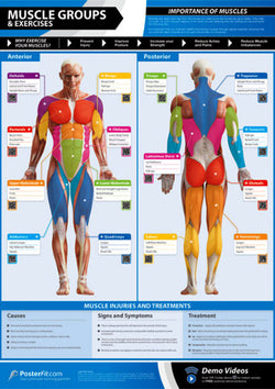 Muscle Groups and Exercises Professional Fitness Training Wall Chart Poster (w/QR Codes) - PosterFit