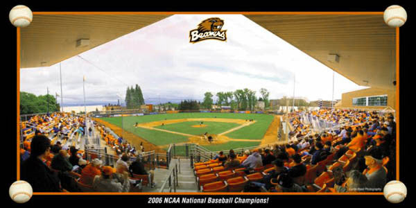 Oregon State Beavers Baseball Panorama - Curtis Reed