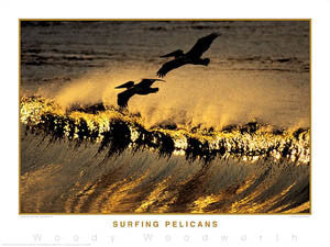 "Surfing ""Surfing Pelicans"" Poster Print - Creation Captured"