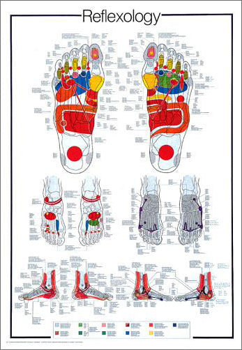 Reflexology Massage Therapy Reflex Points Wall Chart Poster - Nuova Arti Grafiche