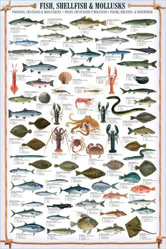 Fish, Shellfish and Mollusks Wall Chart Poster (66 Species) Fishing Poster - Eurographics