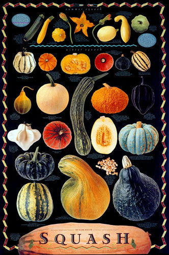 Squash Fruits Culinary Food Wall Chart Poster by Mark Miller - Celestial Arts Inc.