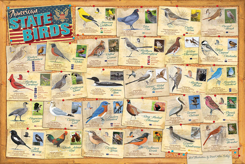 American State Birds Wall Chart Poster (28 Bird Illustrations by David Sibley) - Eurographics Inc.
