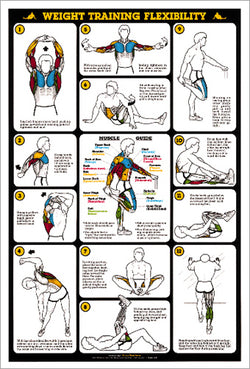 Weight Training Flexibility Stretching Professional Fitness Wall Chart Poster - Fitnus Corp.