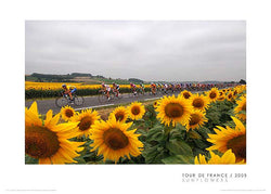 "Tour de France ""Peloton and Sunflowers"" Premium Poster Print - Graham Watson 2005"