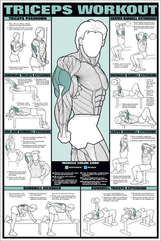 triceps workout professional fitness gym wall chart poster fitnus