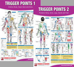 Trigger Points Massage Therapy Fitness Anatomy 2-Poster Wall Chart Set - PFP