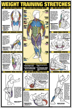 Weight Training Stretches Professional Fitness Instructional Wall Chart Poster - Fitnus Corp.
