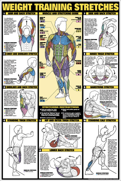 Weight Training Stretches Professional Fitness Wall Chart Poster - Fitnus Corp.