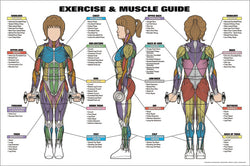 Women's Exercise and Muscle Guide Professional Fitness Anatomy Wall Chart Poster - Fitnus