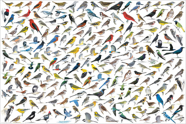 The World of Birds Poster (200 Avian Species Illustrated by David Allen Bibley) - Eurographics Inc.