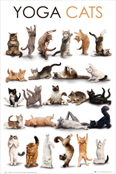 Yoga Cats Poster - GB Eye Inc.