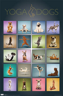 Yoga Dogs Poster - Trends International Inc.