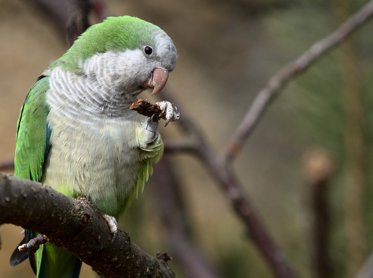 Parrot Supplies Australia FAQ Bird Pet Food
