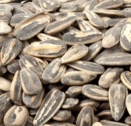 Salted In Shell Sunflower Seeds-Manufacturer-Half Nuts