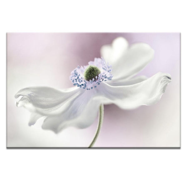 Anemone Photograph Artwork Home Decor Wall Art at Lifeix Design