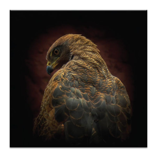 Are you Watching Me Photograph Artwork Home Decor Wall Art at Lifeix Design