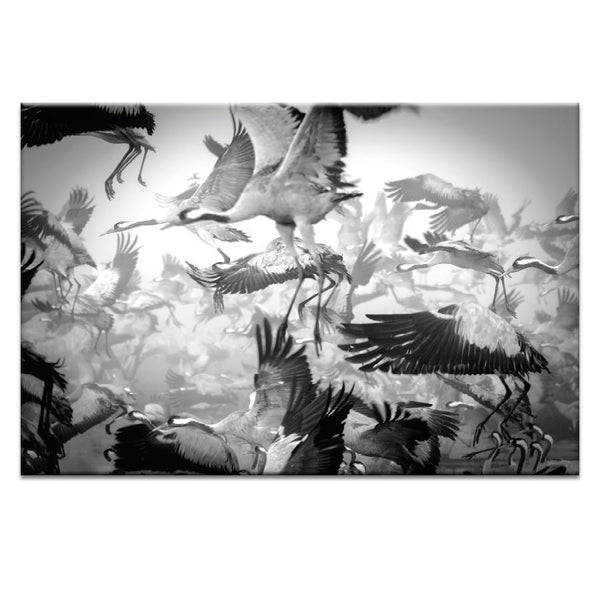 Chaos Photograph Artwork Home Decor Wall Art at Lifeix Design