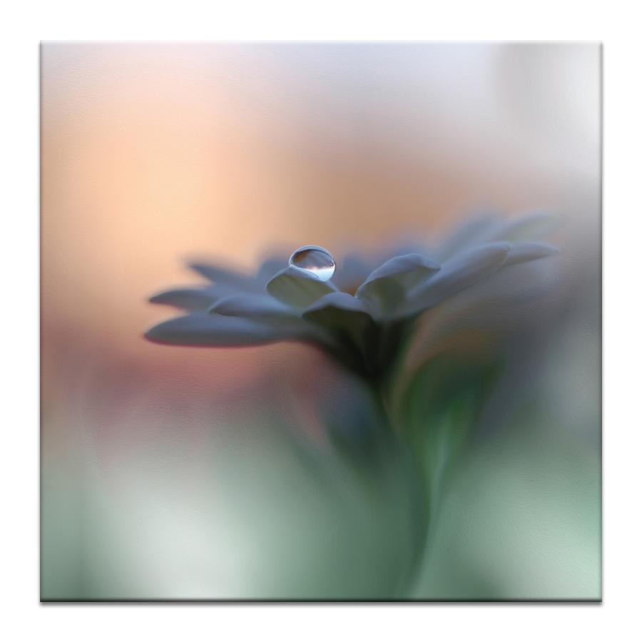 Eyes of the Light Photograph Artwork Home Decor Wall Art at Lifeix Design