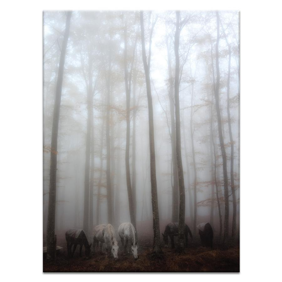 Fog Photograph Artwork Home Decor Wall Art at Lifeix Design