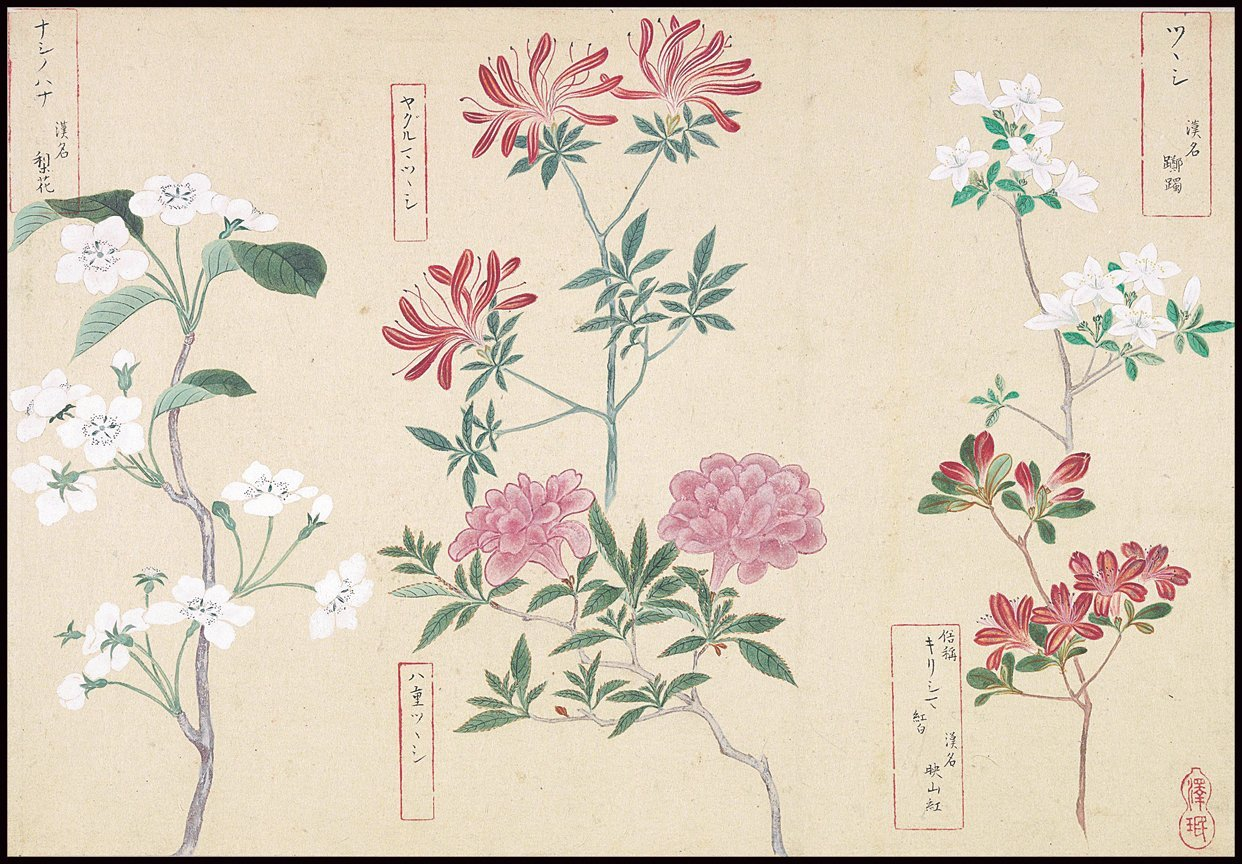 Buy Japanese Botanical Ink And Brush Painting Hand Drawing Flowers And Calligraphy Wall Art Instant Download At Lifeix Design For Only 9 90