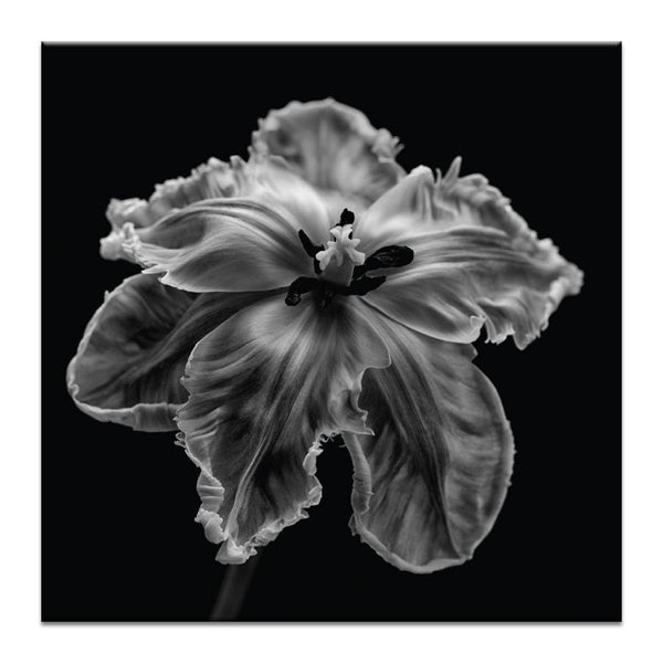 Parrot Tulip Photograph Artwork Home Decor Wall Art at Lifeix Design