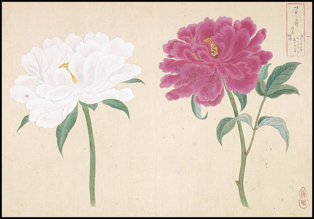 Peony Japanese Botanical Ink and Brush Painting, Hand Drawing Flowers and Calligraphy, Wall Art INSTANT Download at Lifeix Design