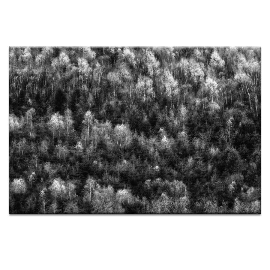Soft Trees Photograph Artwork Home Decor Wall Art at Lifeix Design