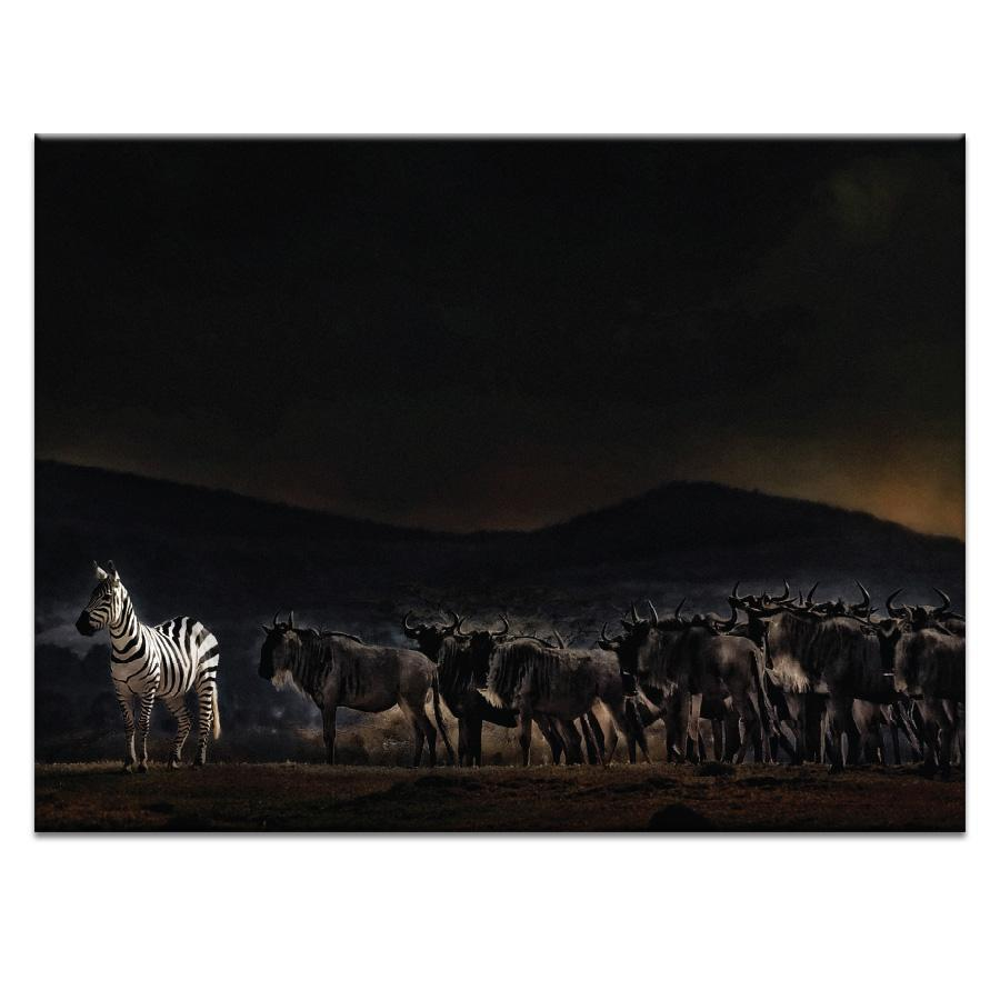 Standing Out in Kenya Photograph Artwork Home Decor Wall Art at Lifeix Design