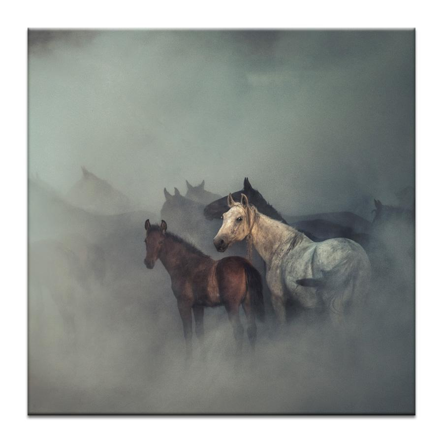 The Lost Horses Photograph Artwork Home Decor Wall Art at Lifeix Design