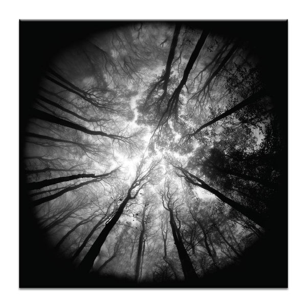 Tree Tops Photograph Artwork Home Decor Wall Art at Lifeix Design