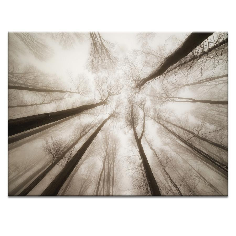 Treetops Photograph Artwork Home Decor Wall Art at Lifeix Design