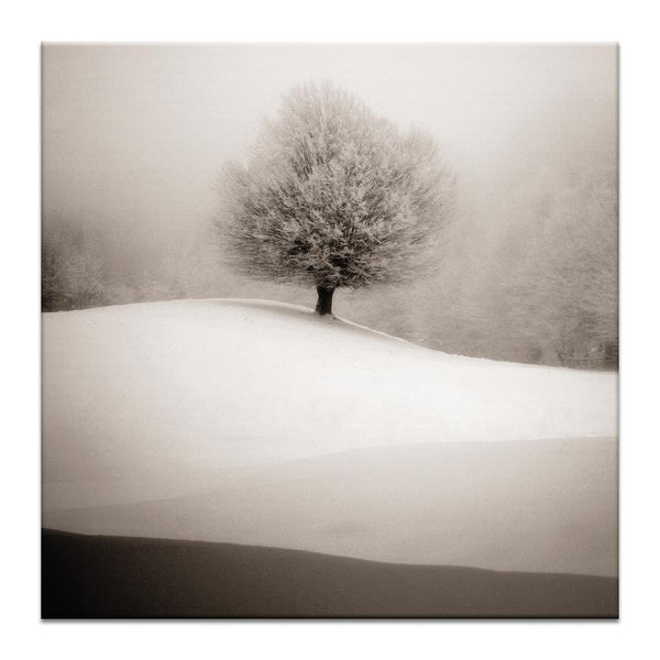 Winter Degrade Photograph Artwork Home Decor Wall Art at Lifeix Design