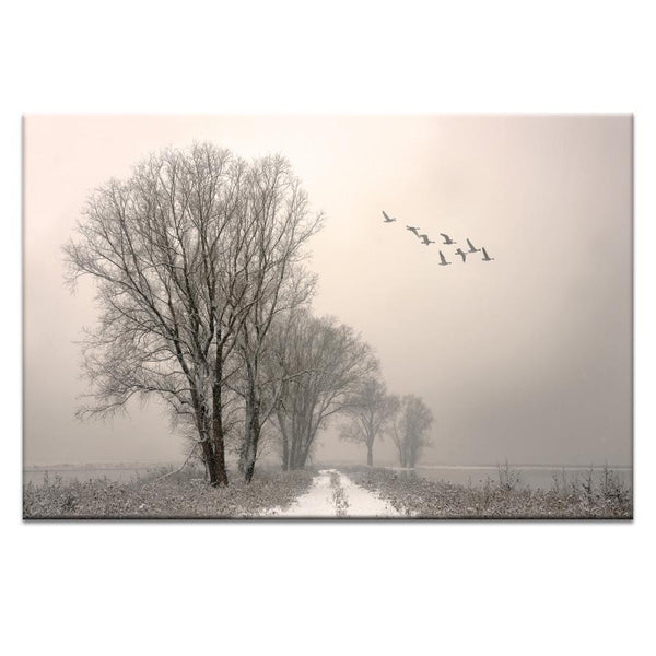 Winterlight Photograph Artwork Home Decor Wall Art at Lifeix Design