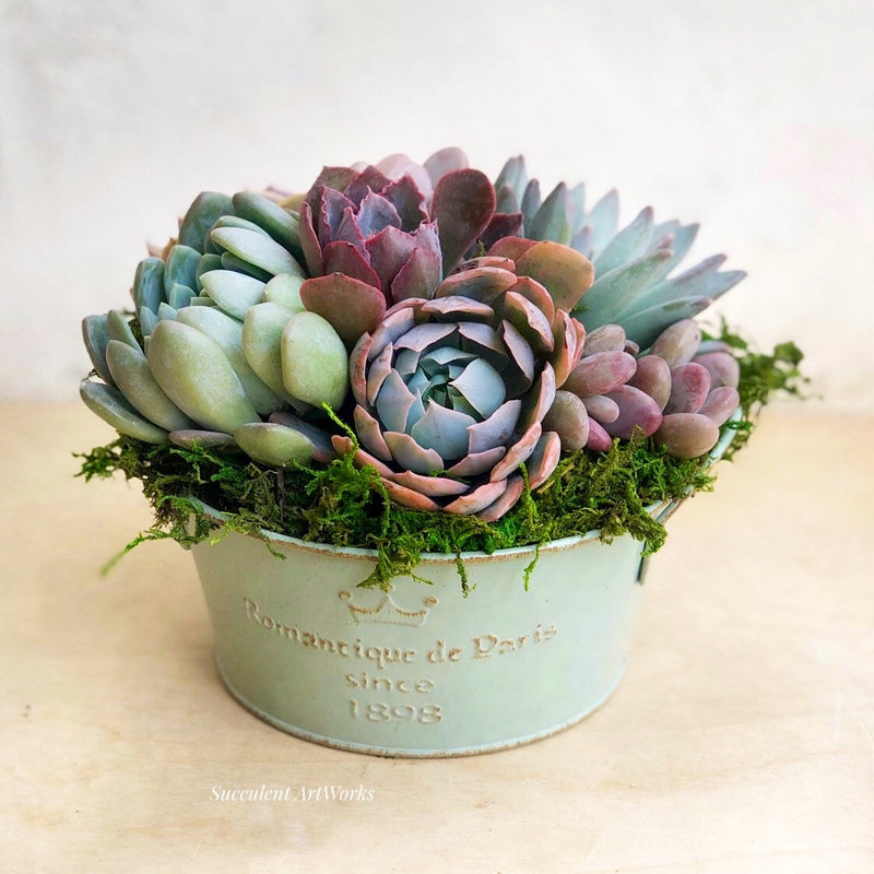 vintage french style garden tin, succulent planter, succulents, painted tin decor, succulent garden, french style tin planter, succulentartworks.com, succulent artworks, succulent gift, housewarming gift, home decor, table decor, garden decor,