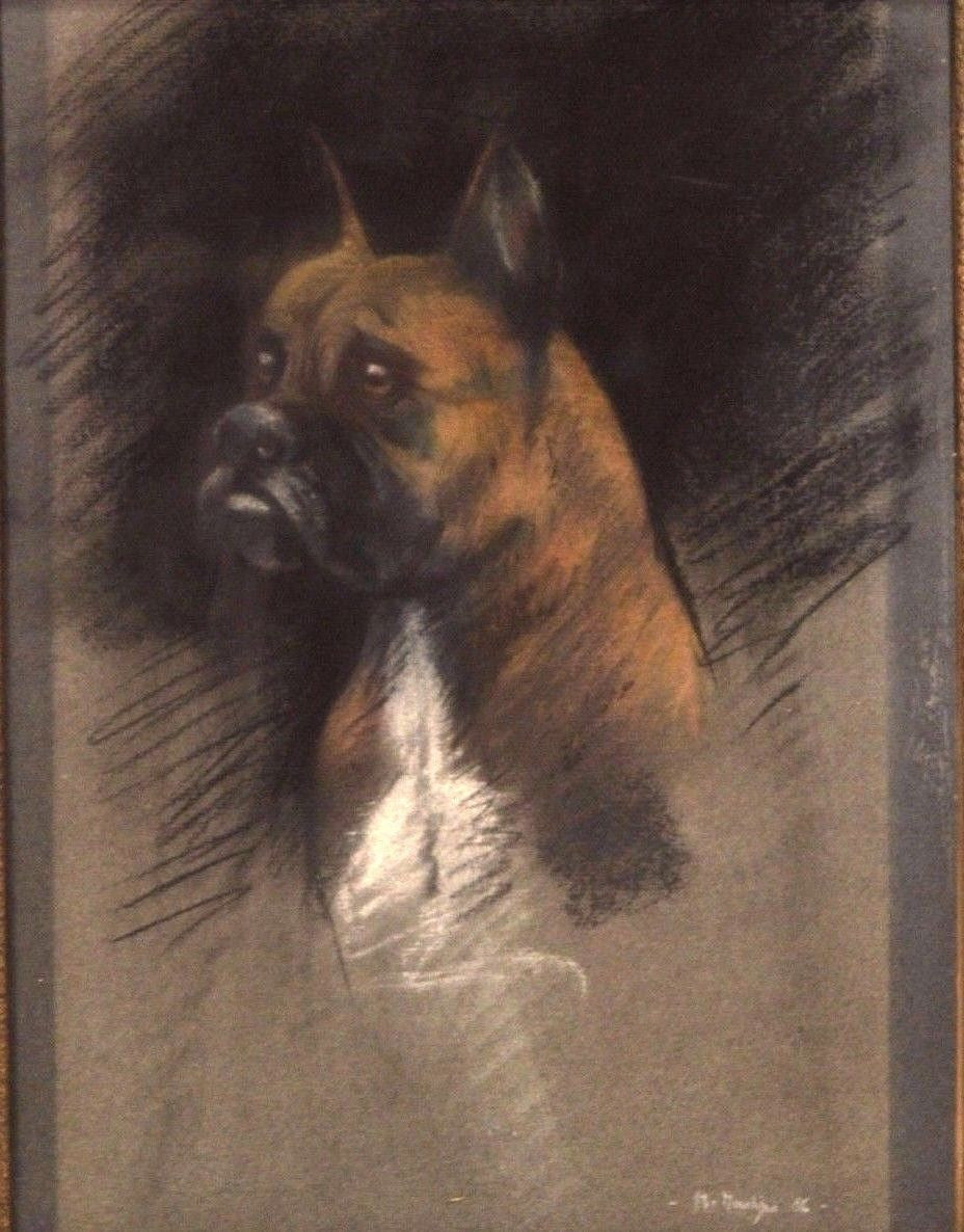 Boxer Dog Portrait Drawing - Charmantiques