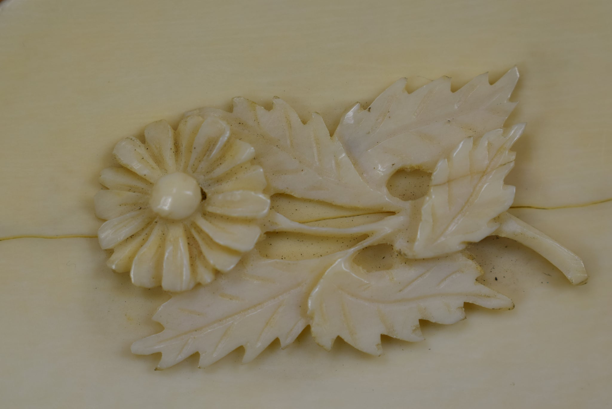 Ivory Coin Purse - Charmantiques