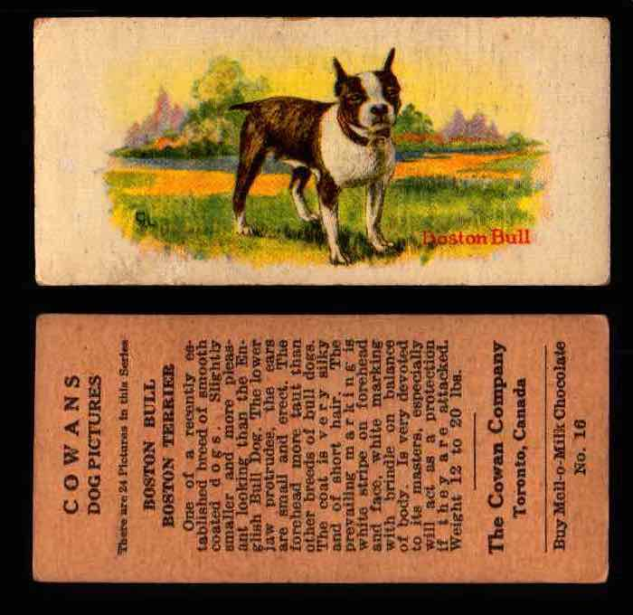 1929 V13 Cowans Dog Pictures Vintage Trading Cards You Pick Singles #1-24 #16 Boston Terrier  - TvMovieCards.com