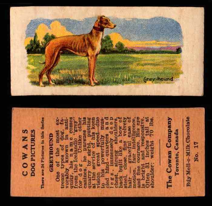 1929 V13 Cowans Dog Pictures Vintage Trading Cards You Pick Singles #1-24 #17 Greyhound  - TvMovieCards.com