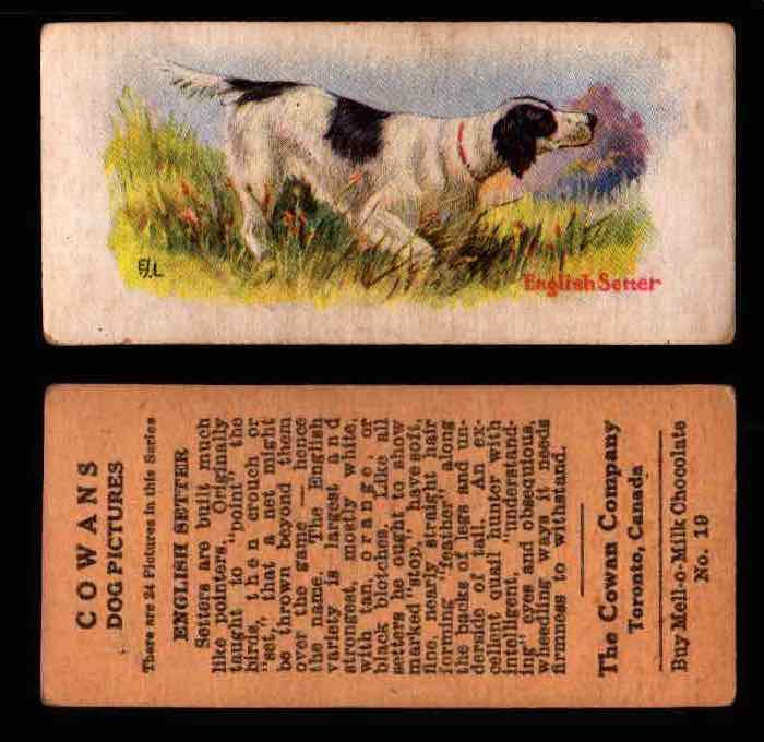 1929 V13 Cowans Dog Pictures Vintage Trading Cards You Pick Singles #1-24 #19 English Setter  - TvMovieCards.com