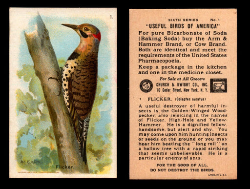 Birds - Useful Birds of America 6th Series You Pick Singles Church & Dwight J-9 #1 Flicker  - TvMovieCards.com