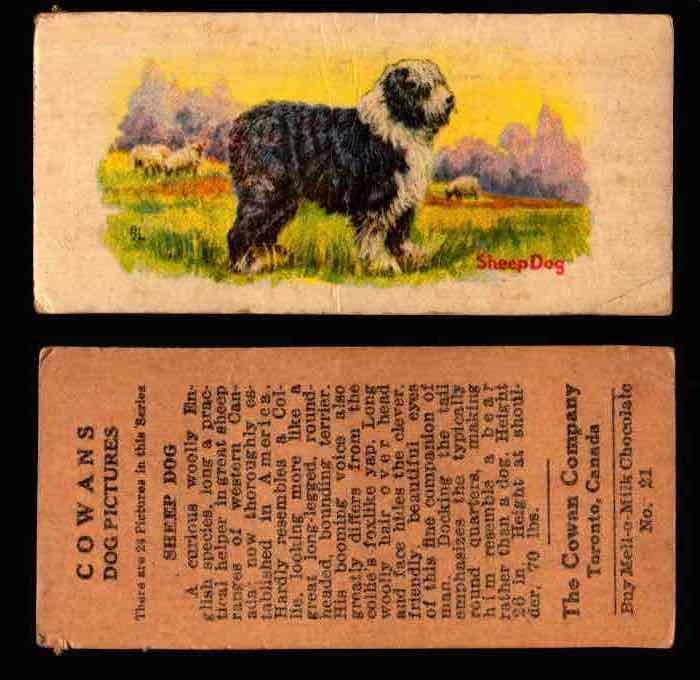1929 V13 Cowans Dog Pictures Vintage Trading Cards You Pick Singles #1-24 #21 Sheep Dog  - TvMovieCards.com