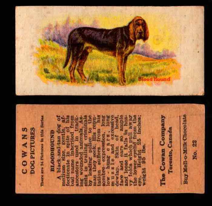 1929 V13 Cowans Dog Pictures Vintage Trading Cards You Pick Singles #1-24 #22 Bloodhound  - TvMovieCards.com