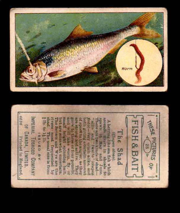 1910 Fish and Bait Imperial Tobacco Vintage Trading Cards You Pick Singles #1-50 #25 The Shad  - TvMovieCards.com