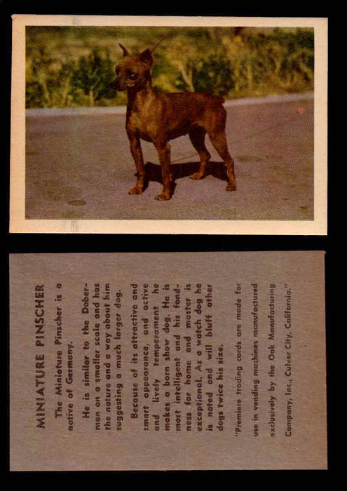 1957 Dogs Premiere Oak Man. R-724-4 Vintage Trading Cards You Pick Singles #1-42 #28 Miniature Pinscher  - TvMovieCards.com
