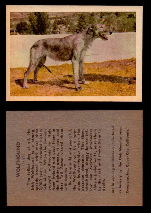 1957 Dogs Premiere Oak Man. R-724-4 Vintage Trading Cards You Pick Singles #1-42 #41 Wolfhound (Irish)  - TvMovieCards.com
