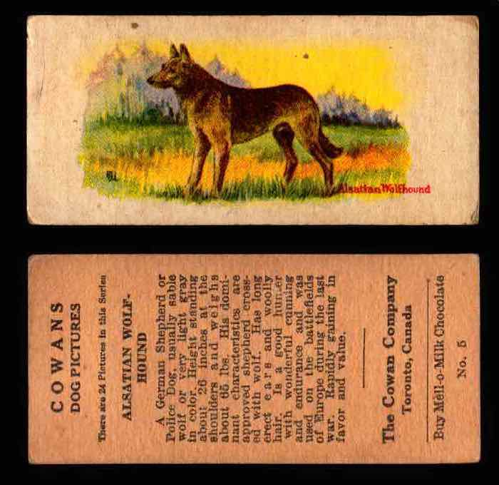 1929 V13 Cowans Dog Pictures Vintage Trading Cards You Pick Singles #1-24 #5 Alsatian Wolf Hound  - TvMovieCards.com
