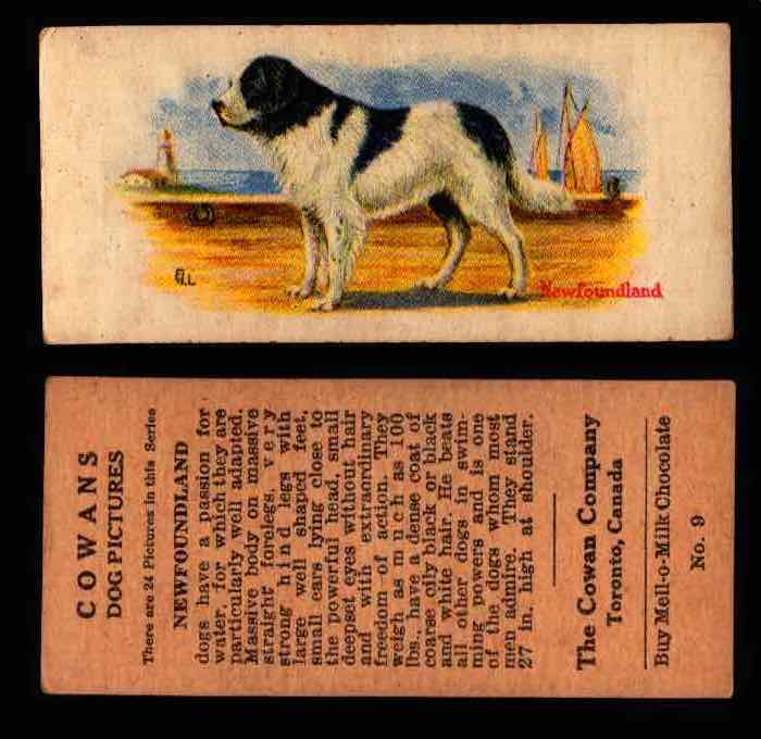 1929 V13 Cowans Dog Pictures Vintage Trading Cards You Pick Singles #1-24 #9 Newfoundland  - TvMovieCards.com