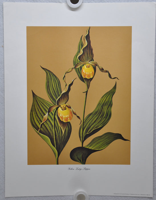 Yellow Lady's Slipper 1967 Lithograph Flower Art Print 13 x 17   - TvMovieCards.com